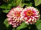 Beautiful Flower 18