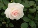 Beautiful Flower 19