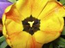 Beautiful Flower 21