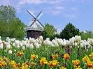 Holland Tulip Festival Michigan