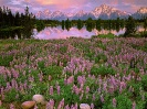 Sunrise Light Along Pilgrim Creek Grand Teton National Park Wyoming