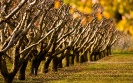 High autumn trees