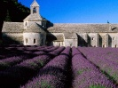 France-Lavender Field Abbey of Senanque Near Gordes Provence