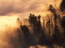 City Town Wallpapers :: France-Woodland in Mist Vosges