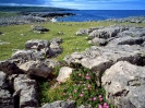 Ireland-Wildflowers of the Burren