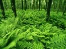 Green 3595