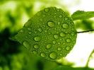 Green leaf water drop 04