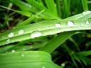 Green leaf water drop 08