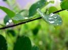 Green leaf water drop 09