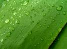Green leaf water drop 14