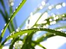 Green leaf water drop 16