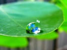 Green leaf water drop 29