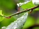 Green leaf water drop 35