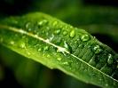 Green leaf water drop 36