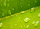 Green leaf water drop 37