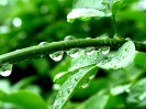 Green leaf water drop 39
