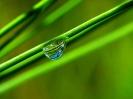 Green leaf water drop 41