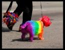 Rainbow the Dog