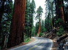 Redwood Road Sequoia National Park