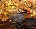 Beautiful River 30