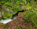 Beautiful River 31