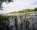 Beautiful River 35